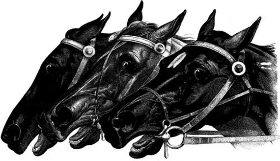 3 horse heads printable wall art Digital image graphics download black and white animal clipart png jpg clip art bedroom living room artwork
