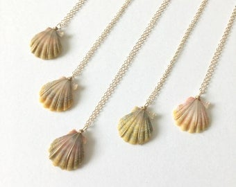 Sunrise Shell Necklace, FREE Shipping, Sunrise Shell Jewelry, Gold Fill, Hawaii Made, Hawaiian Jewelry, Simply Sparkle Designs (Dime Size)