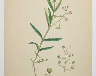 1866 Vintage Botanical Print, Sowerby Marsh Speedwell Flower Print, Original Antique Print, Pink Flowers, Unique Birthday Gift for Gardener
