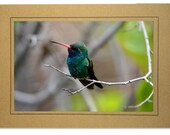 Hummingbird Cards - Broad-billed Hummingbird Card - Handmade Hummingbird Cards - Blue Green Hummingbird - Custom Hummingbird Cards