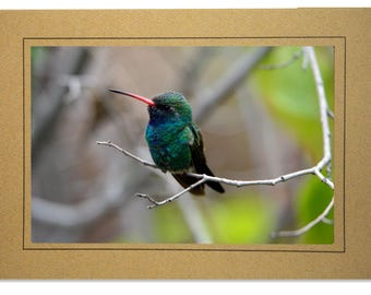 Hummingbird Cards - Broad-billed Hummingbird Card - Handmade Hummingbird Cards - Blue Green Hummingbird - Custom Hummingbird Cards