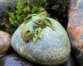 Hatching Welsh dragon egg