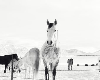 Winter Horse Photograph | Black and White Western Horse Art