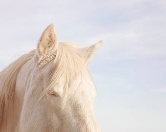 Modern White Horse Photograph in Color | Beautiful Equestrian Art