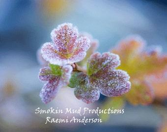 Leaves, Frozen, Frozen Leaves , Flowers , Frozen Flower , Delicate, Pink, Blue, Frozen, Frozen Flower , Water Color Flower Photograph Print