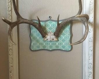 Deer antler mount on wood