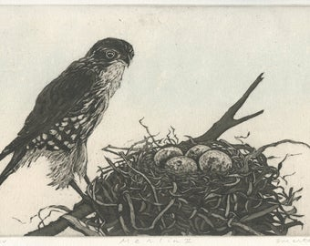 Merlin, Fine Art Etching of Falcon at Nest
