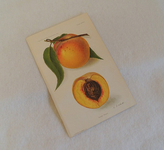 2 Orig 1910 Lithograph 6 x 9 Colored Plates PEACH & RASPBERRY..  U.S.  Ag Yearbook