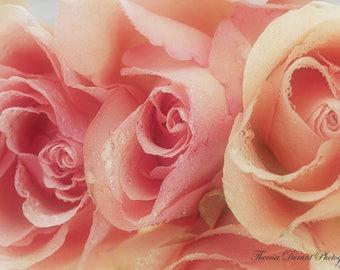 Fine Art Photography Fine Floral art photography Macro floral photography white rose print roses photography flower photography Nature photo