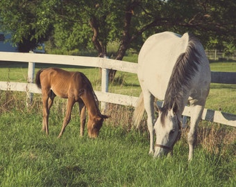 Foal & Mama, Horse Photography, Fine Art Print, Baby Animals, Colt, Mare, Equine Image, Farms Home Decor, Green Pastures, Nursery Wall Art