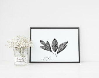 "Sassafras Tree Leaf Print | 8"" x 10"" Illustration 