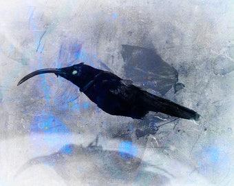 Bird Display Dark Art Photo Print