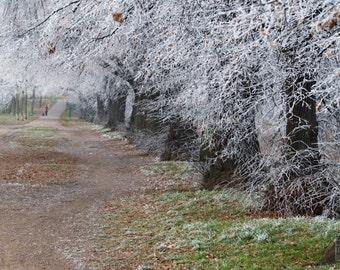Winter Wonderland, Landscape print, Winter trees, Frozen tree line, Neutral Cabin décor, Rustic home décor, Nature photography