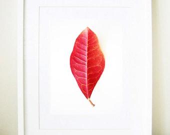 Red Leaf - Botanical Photography - giclée print, fall, autumn, yellow, pink, botanica, minimalist, nature close up, 8x10