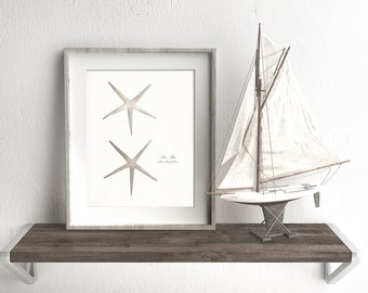 Two Coastal Decor Antique Sea Stars - Nautical Sea Shell Giclee Art Print 8x10 antique white