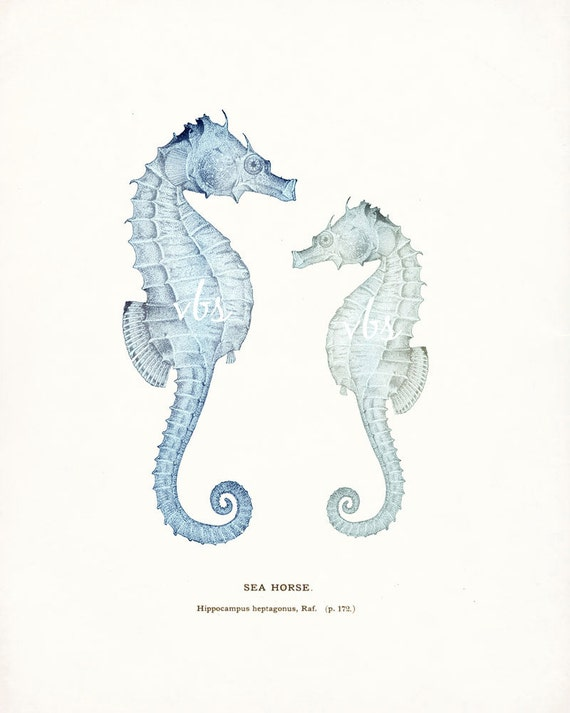 Coastal Decor  - Nautical Print, Antique Sea Horses Giclee Art Print in French blue