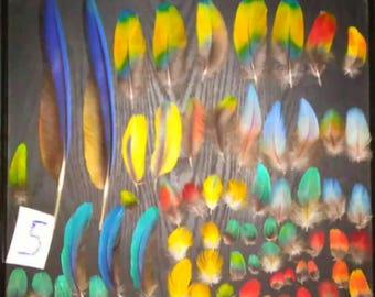 Assorted Macaw Parrot Feathers!