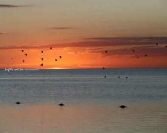 Orange Red Sunset Seagulls Beach Photo, Ocean Photography, Sunset Sea Picture, Tropical Coastal House Decor, Nautical Home Decor Wall Art