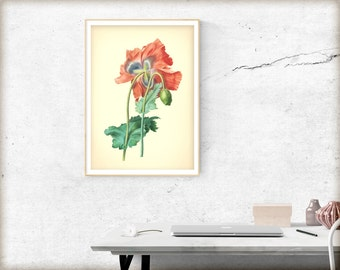 Stunning Botanical Print, Orange flower wall art, digital download  #28 INSTANT DOWNLOAD