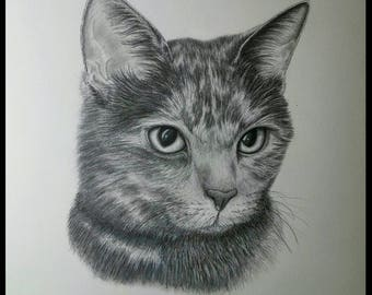 Cat Portrait~Custom Pencil Drawing