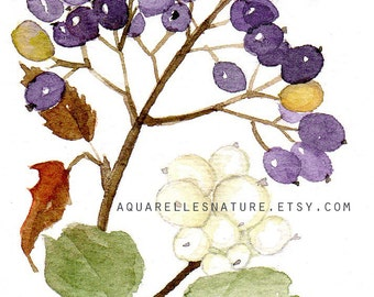 Winter berries Aceo, original watercolour, Miniature art,  winter painting, violet berries, white berries, winter time