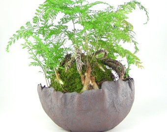 Dark Brown Kusamono Planter, Rounded Bonsai Pot, Wabi Sabi Plant Pot, Brown Stoneware Clay Planter, Unglazed Succulent Planter 01-17-10
