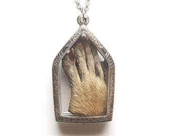 real taxidermy raccoon paw scrolled window locket necklace
