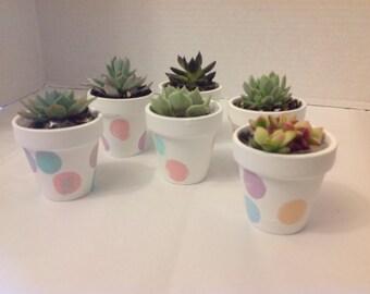 Succulent plant wedding favors. Beautiful terra cotta pot. DIY 25 pots with 25 2 inch succulents.
