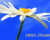 Hello, flower!  A card featuring an original photograph.  Blank inside for your own message.