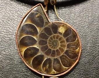 Agatized Ammonite Necklace