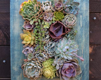 "SALE!! 16"" x 12"" Succulent Vertical Garden Ready to Ship"