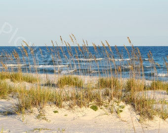 Florida Beach Photograph // Beach Landscape Print // Sea Oats and Sand Dune Picture
