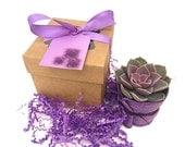 Purple Succulent in Gift Box-Succulent Favor-Thank You Gift-Baby Shower Favor-Thank You Succulent-Wedding Favor-Birthday Gift-Purple Gift