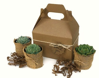 Succulent Gift Box-Garden in a Box-Personalized Gift-Gardener Gift-Corporate Gift-Birthday Gift-Housewarming-Sympathy Gift-Thank You Gift