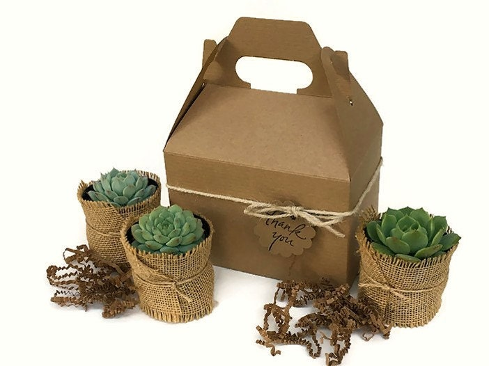 Succulent Gift Box Garden In A Box Personalized Gift Gardener