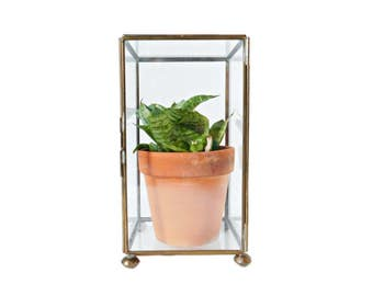 Vintage Glass Display Case, Glass Terrarium, Brass and Glass Box, Rectangular Shape With Hinged Door, Great for Plants or Keepsakes!