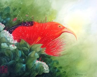 """Hawaiian  I'iwi bird watercolor 11"""" X 14"""" print"""