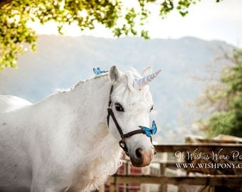White & Gold Unicorn Horn Costume for Horses and Ponies by WishPony, The Original Makers of the Child-Safe Unicorn Horn MADE TO ORDER
