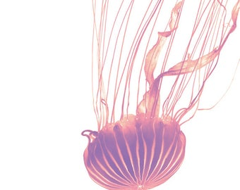 Pink Jellyfish Art Print, Pink Jellyfish Photography Wall Art, Jellyfish Photography, Jellyfish Poster, Pink Jellyfish Art