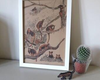 Tree Kangaroos framed screen print - illustrated screenprint - animal art - hand printed silk screen art - tree kangaroo illustration