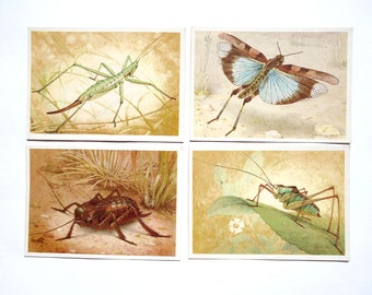 Grasshoppers Set of 14 Vintage Postcards, Artist by L. Aristov, 1990