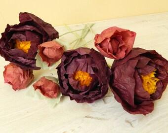 set of burgundy peonies
