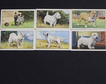 Vintage Cigarette Card Gallaher Ltd DOGS 1936 Have 6/48 For Sale Excellent Condition Collectable Craft Collage Scrapbooking