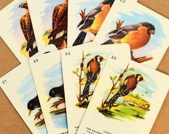 Vintage illustrated bird swap cards - Golden Eagle, Finch, Blackbird