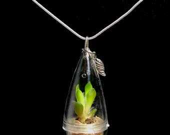 LIMITED Succulent Necklace / Wearable Live Plant / Terrarium Necklace / Miniature Terrarium / Tiny Wearable Terrarium Accessories
