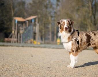 Il X J on Tutorial Dog Harness Pattern