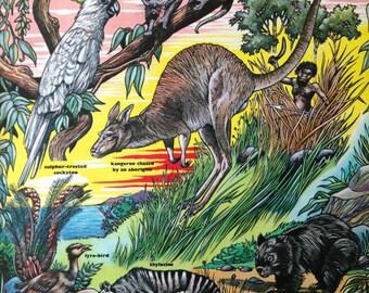 Australia zoo animals vintage themed illustration - A4 Kangaroo koala wombat - ready to frame retro print image 1960s