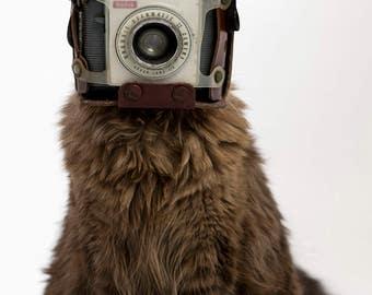 Vintage Kodak Cat