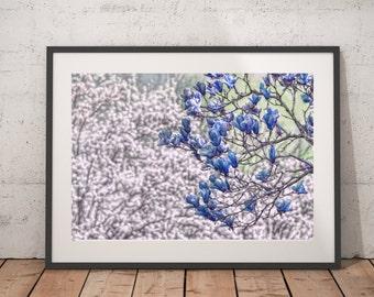 Blue Flowers, Dogwood, Spring, Wall Art, Printable, Blooms, Fine Art, Digital