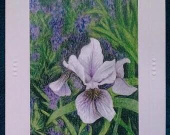 Blank Greeting Card (Iris)
